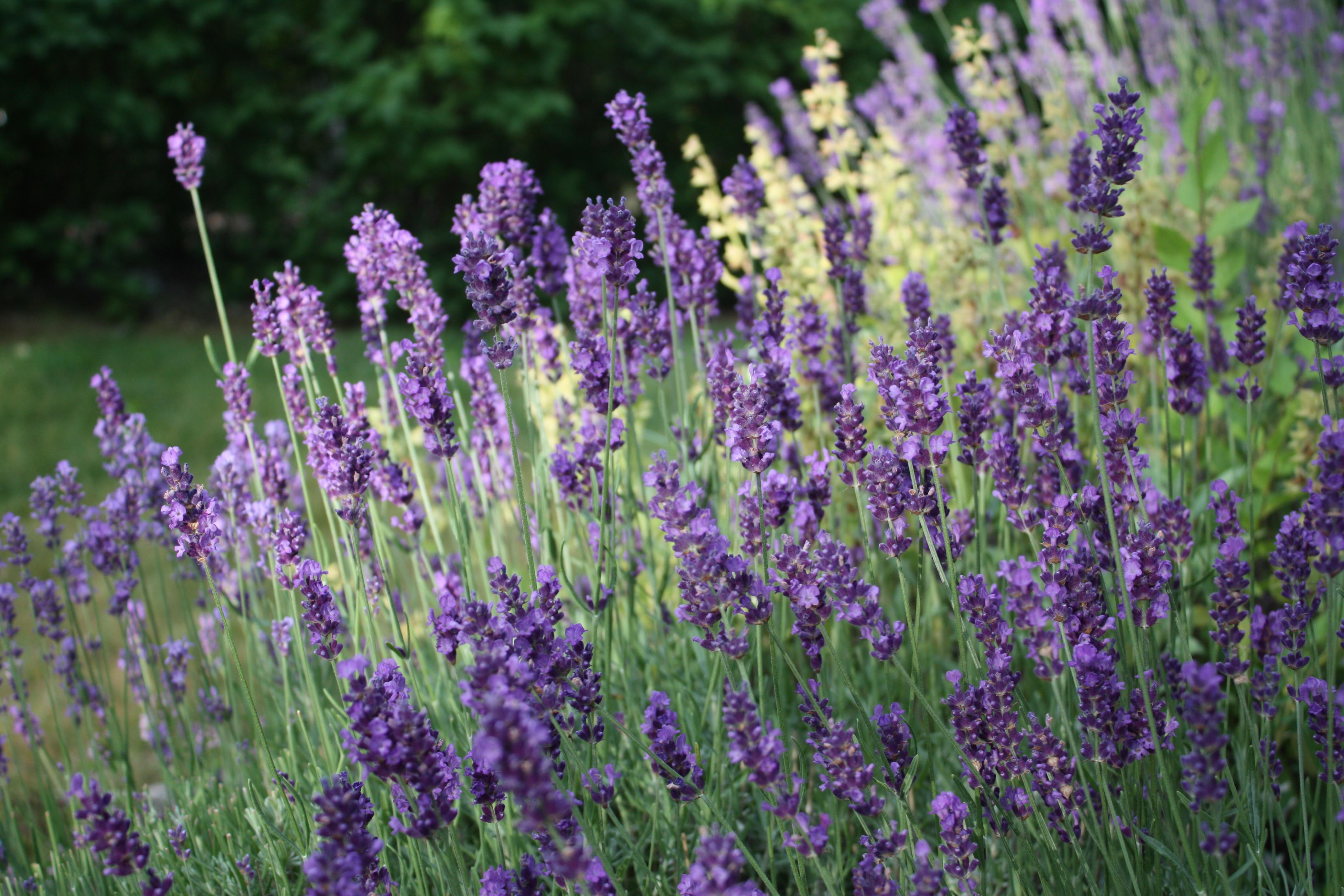 Beneficios del café molido para plantas y jardín - Urban Organic Gardener