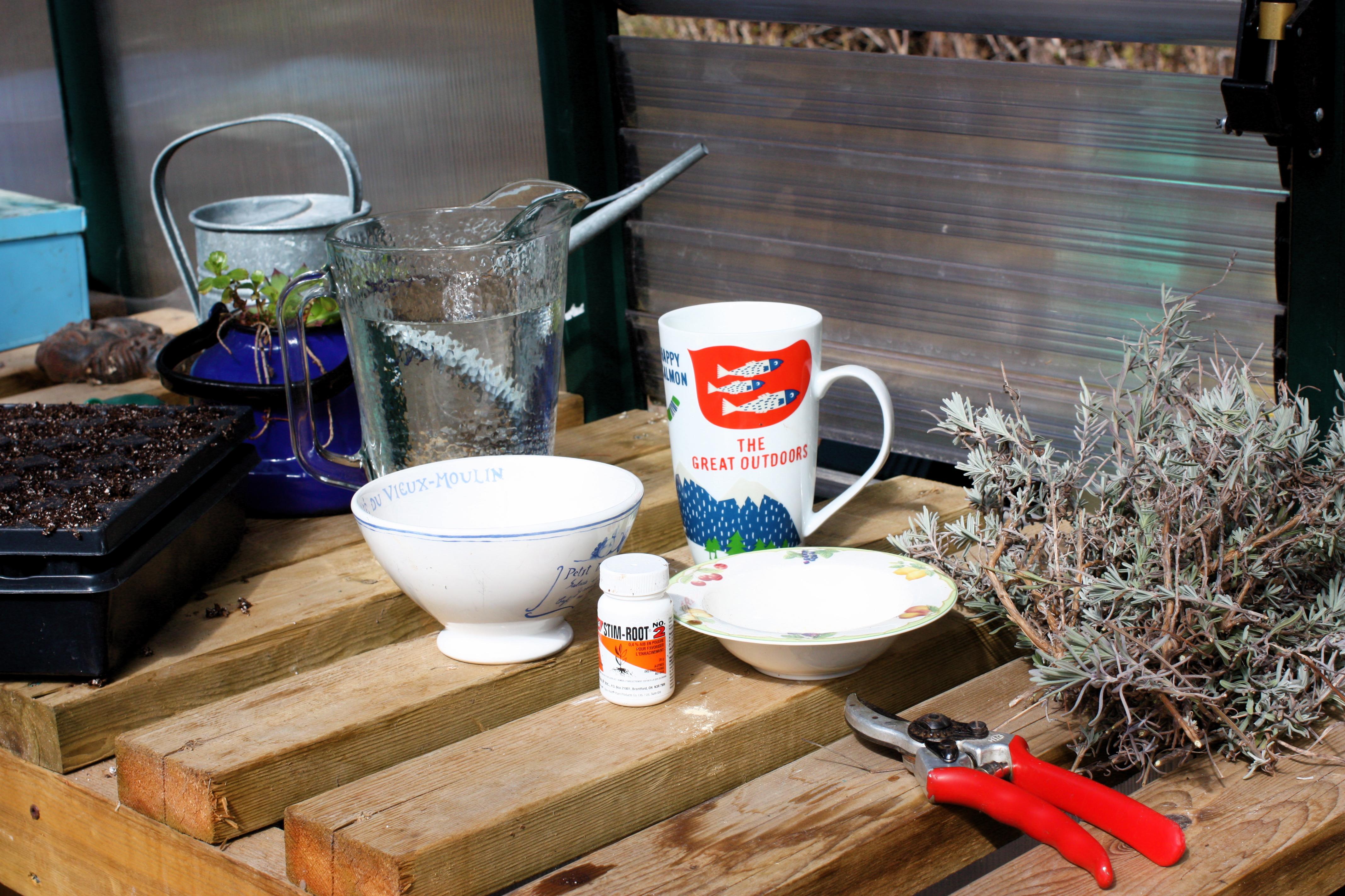 El encanto de la lavanda | Bellas Jardinería