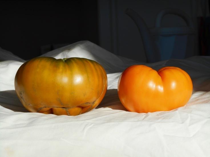 sweet pit tomato 2.jpg